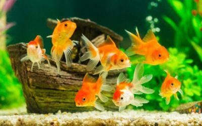 [Étude] L'aquarium : quels effets sur le stress ?